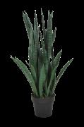 Planta Verde Sanseviera H 90