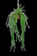 Hängplanta Verde med kruka